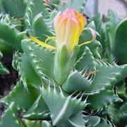 semi piante