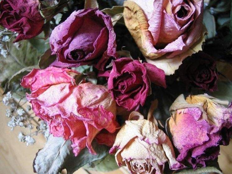 Rose secche nei toni rosa e violetto