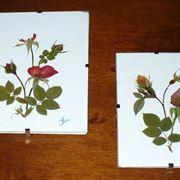 quadri fiori essiccati
