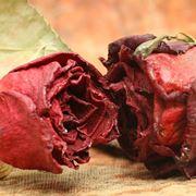 Rose essiccate