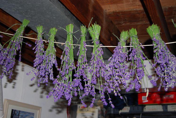 Essiccare fiori di lavanda