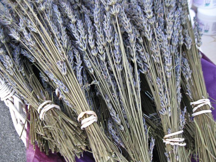 Mazzetti di fiori di lavanda da essiccare