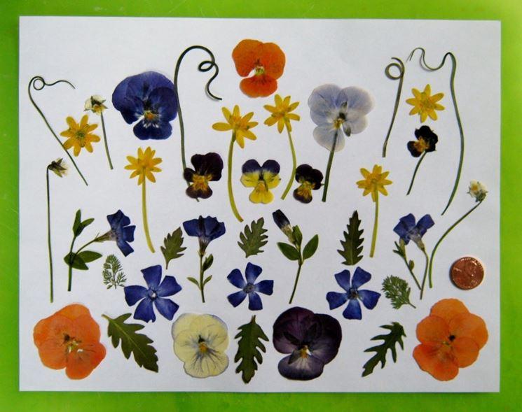 Gruppo di fiori e foglie pressate