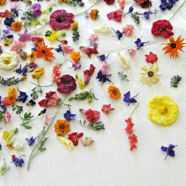 fiori secchi colorati