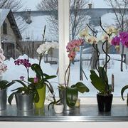 orchidee coltivazione