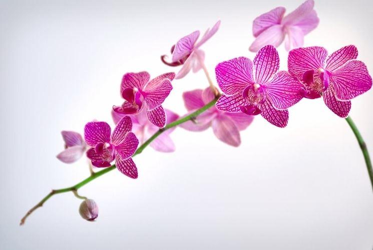 Rinvaso di orchidea
