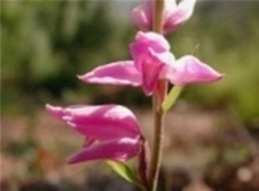 Un primo piano ad una Orchidea