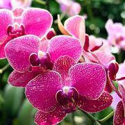 orchidea acqua