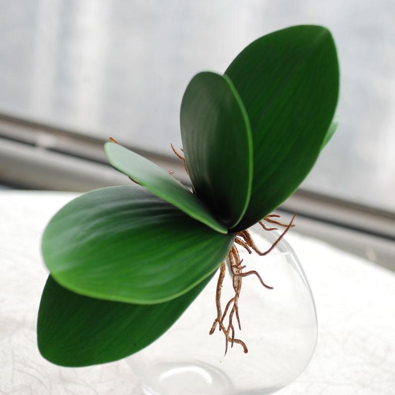 Le foglie delle orchidee phalaenopsis orchidee for Orchidea acqua