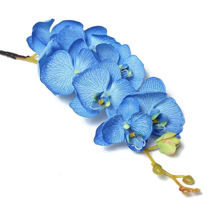 Le rose blu sono molto apprezzate dagli orchidofili