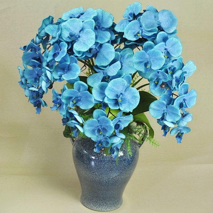 I fiori di Vanda Coerulea