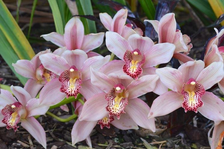fiori di orchidea.