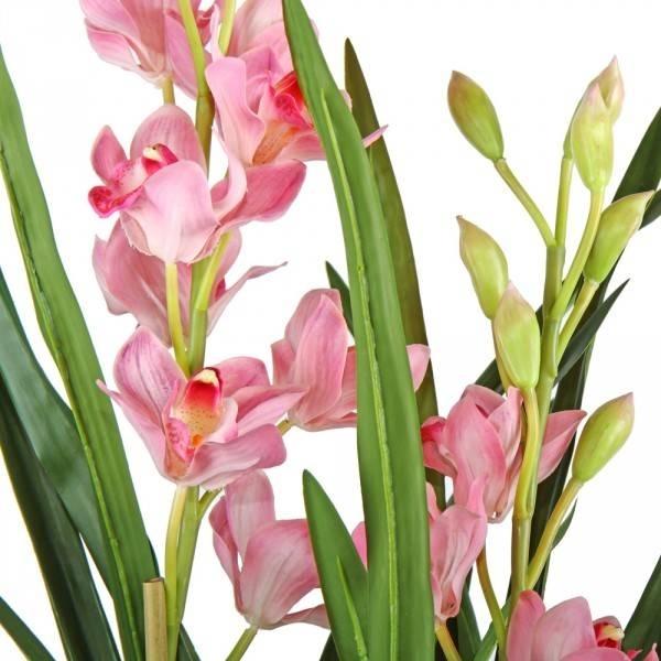 Orchidea Cymbidium Fuxia