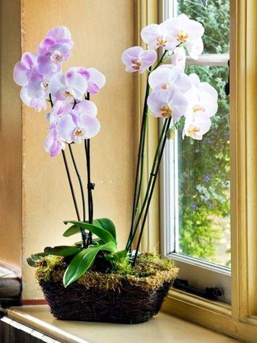 Pianta di orchidee vicina alla luce