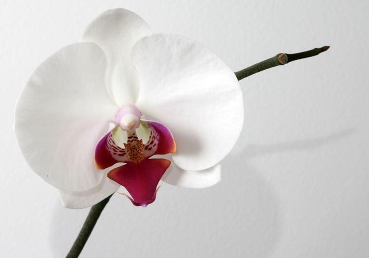 insieme di orchidee.