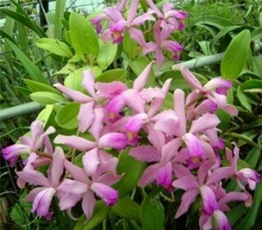 Pianta di orchidee