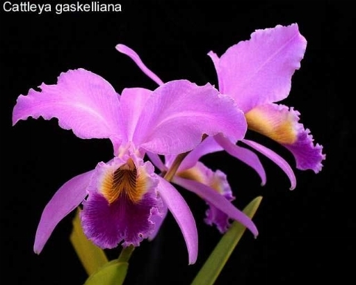 Orchidee rosa orchidee for Concime per orchidee