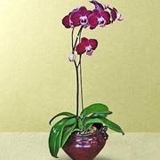 vasi trasparenti per orchidee