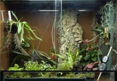 un terrario per orchidee