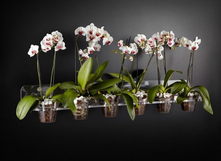 Fioritura orchidee orchidee orchidee in fiore