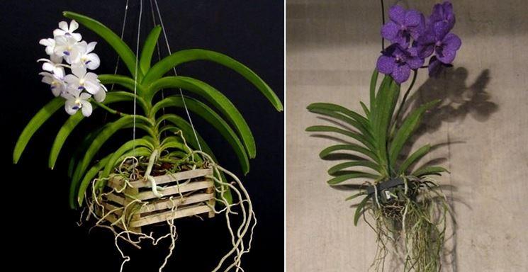 Vasi per orchidee orchidee modelli di vasi per orchidee - Orchidee da appartamento ...