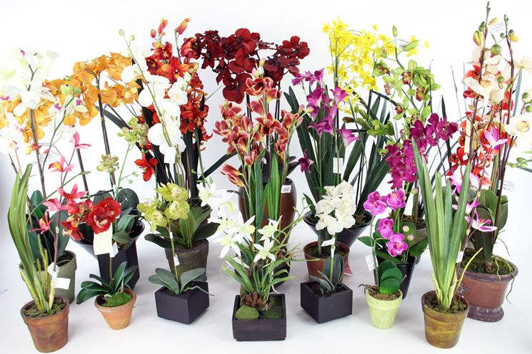 orchidee vasi