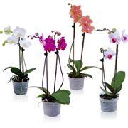 vasi per orchidee