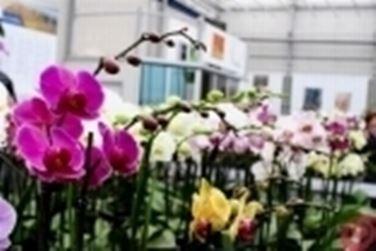 orchidee vivaio