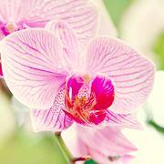 mazzo di orchidee