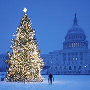 L'albero di Natale di piazza San Pietro a Roma