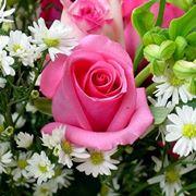 fiore anthurium