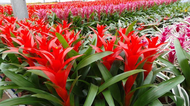 Piante ornamentali for Piante e fiori da appartamento