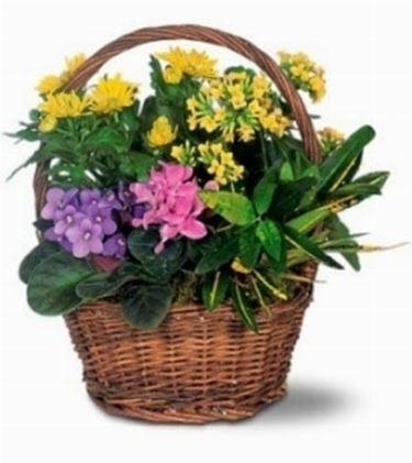 Un esempio di fiori che troviamo sulle piante di Croton