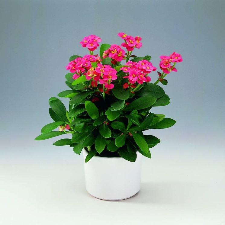Fiori da appartamento piante appartamento come - Piante da interno con fiori ...