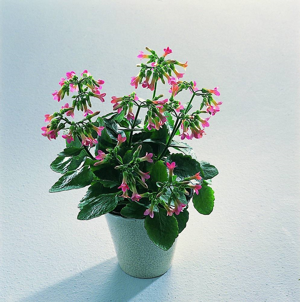 Piante e fiori d appartamento idee per interni e mobili for Piante e fiori da appartamento