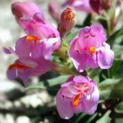 Un esempio di fiori finti