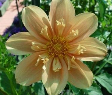 Ecco a voi un tipico fiore finto