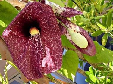 Un esempio di fiori secchi