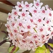 una perfetta fioritura geometrica dell