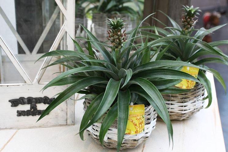 piante esposte al sole in terrazza