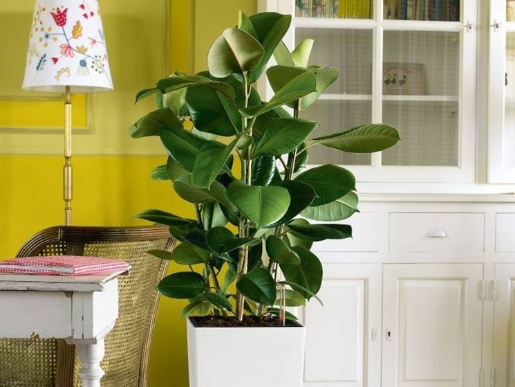 Pianta da appartamento piante appartamento come for Piante appartamento design