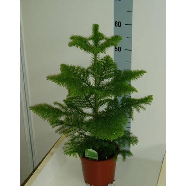 pianta da appartamento - piante appartamento - come scegliere la ... - Piante Da Giardino Piccolo