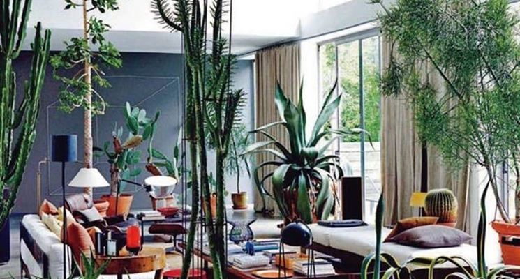 Piante appartamento piante appartamento conoscere le - Piante grasse in casa ...