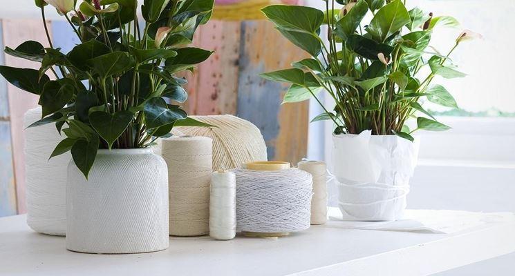 Piante da appartamento con fiori   piante appartamento   fiori per ...