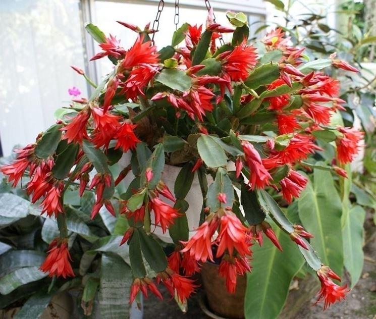 Piante da appartamento con fiori piante appartamento - Piante fiorite da appartamento ...