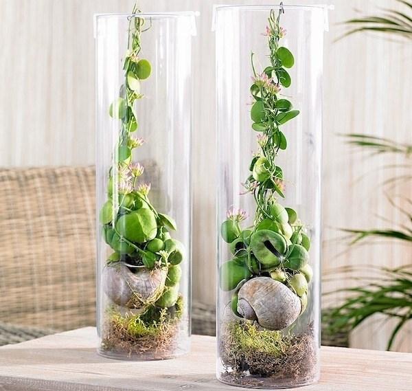 Piante da appartamento con fiori - piante appartamento - Fiori per lappa...