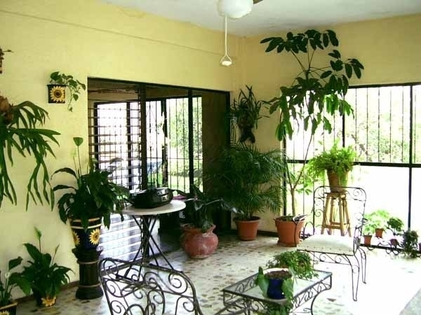 Piante da appartamento poca luce piante appartamento - Piante verdi interno ...