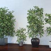 piante da interno resistenti