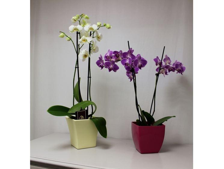 Piante da appartamento piante appartamento tipologie - Orchidee da appartamento ...