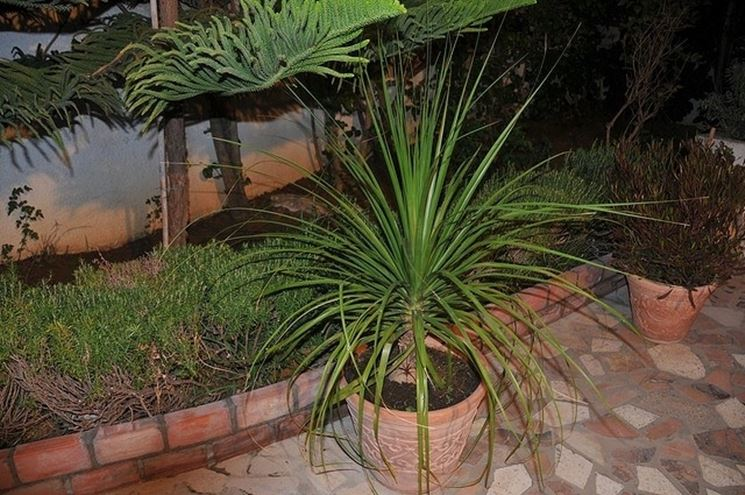 Piante da casa piante appartamento piante da appartamento for Piante in casa